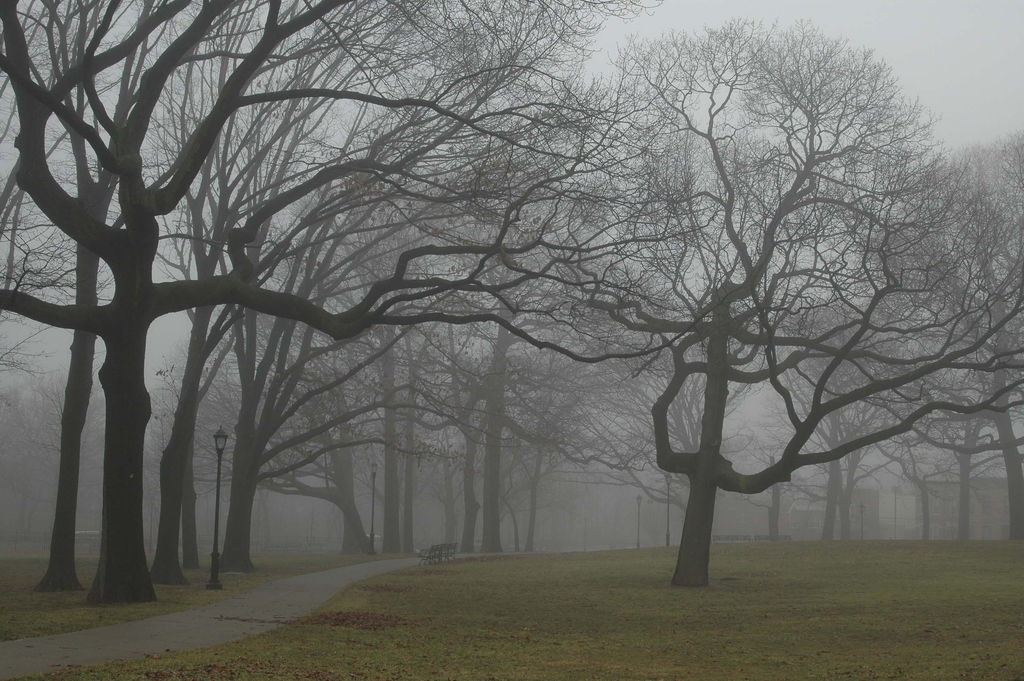McKinley Park in the fog